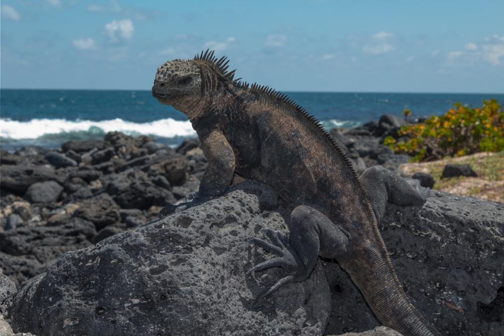 3 activités incontournables à faire sur l'île de Santa Cruz dans l'archipel des Galápagos